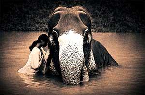 Девушка и слон